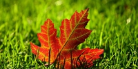 maple-leaf-3680684_640 - Tvregion12.ru